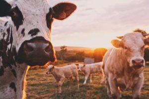 ley de desarrollo del medio rural